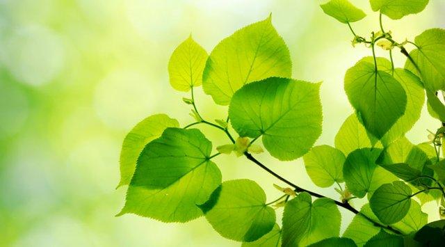 photosythesis leaves.jpg