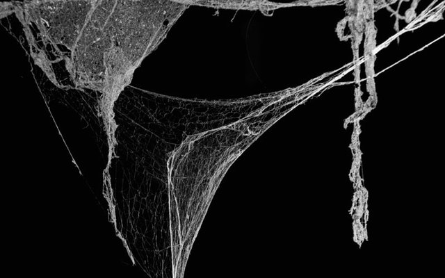 polymer-spiders-web.jpg