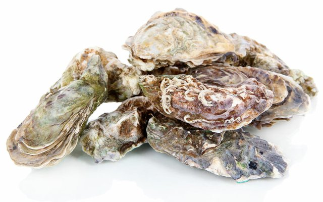 polymer-oyster-shells.jpg