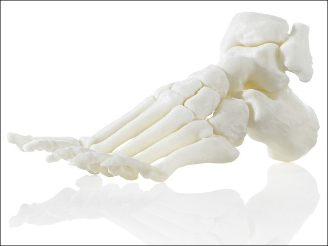 Additively manufactured foot.