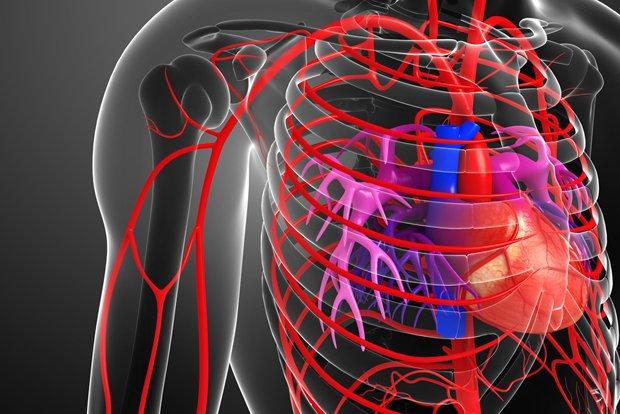 arteries.jpg