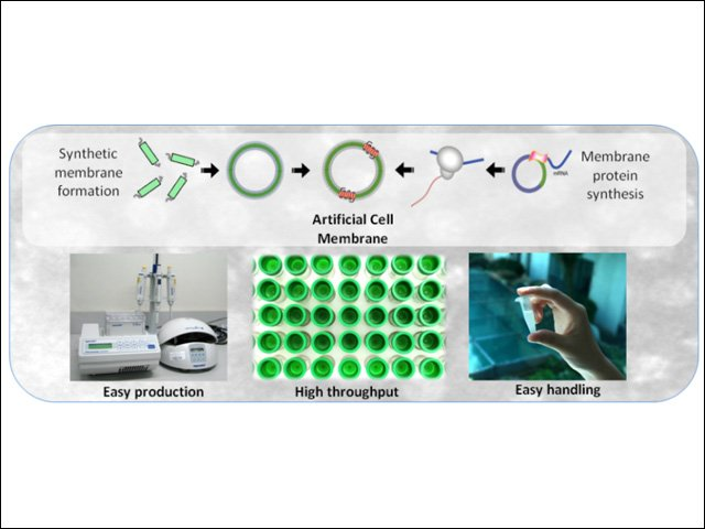 Artificial Cell Membranes that will reduce costs and time of drug discovery_MEDICA 2013 640X480.jpg