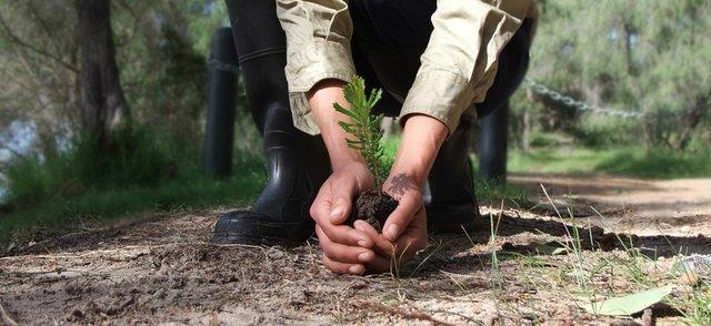 Seedling Australia